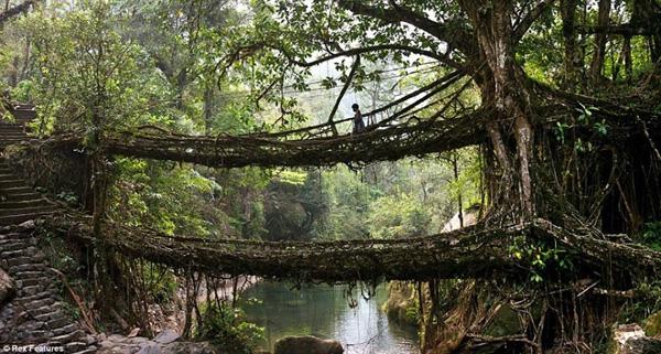 pontes_vivas