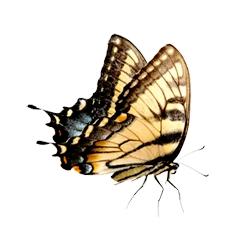 A educação é o efeito borboleta transformador