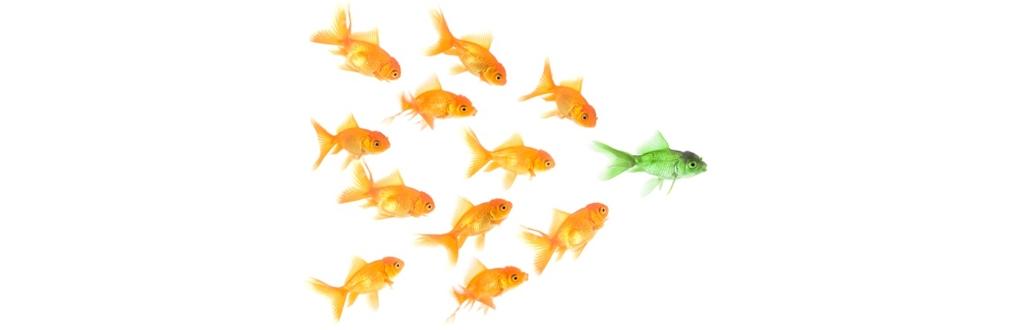 O marketing de conteúdo na construção de autoridade